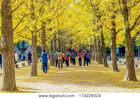 Tourists taking photos of the beautiful scenery in autumn around Nami Island.