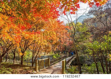 Tourists taking photos of the beautiful scenery around NaejangsanSouth Korea.