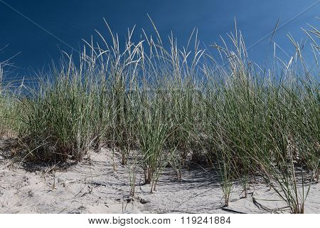 Long grass on a beach with blue sky background