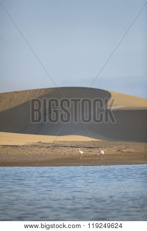 Flamingo at the Walvis Bay wet land in western Namibia.