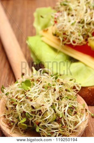 Alfalfa And Radish Sprouts On Spoon And Vegetarian Sandwich