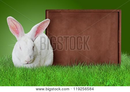 White rabbit and chocolate bar as a board on grass on green background