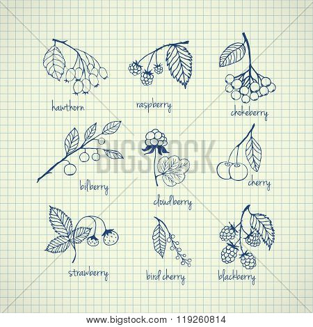 Set of garden and wild hand-drawn berries