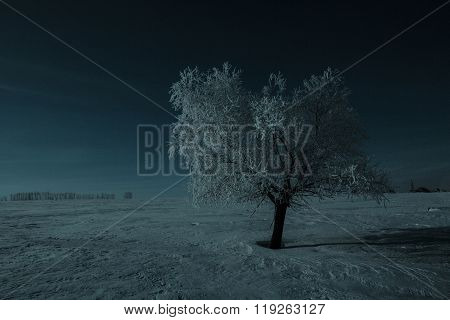 Alone Tree And Moon In Night