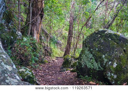 Rainforest path. Hiking in tropical rain forest