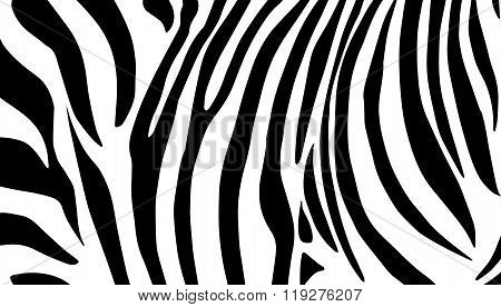 Zebra stripes skin background