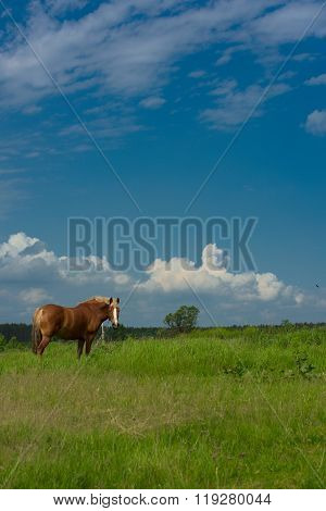 Horse On The Field.