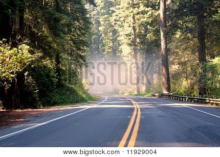 Asphalt road running through forest