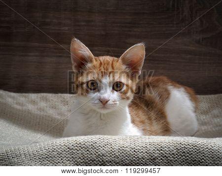 Kitten waiting for the hosts.