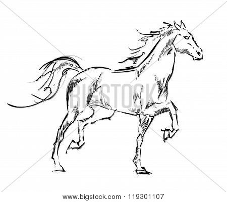 Galloping Horses. Hand-drawn Illustration