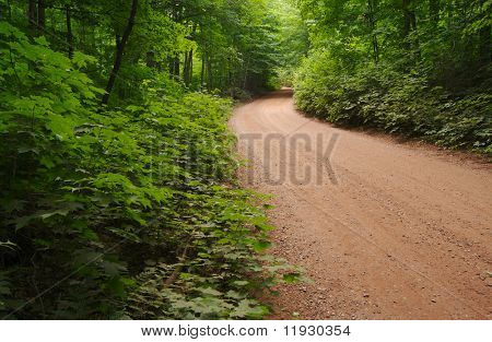 Lush green foliage along dirt roadside.