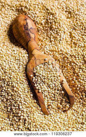 Quinoa Dry Seeds
