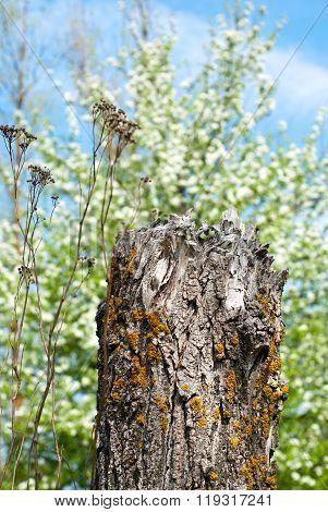 The dry stump