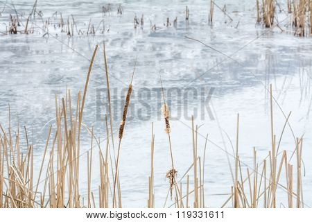Frozen Reeds Over Icy Lake. Snowy Winter Landscape With Dry Frozen Reeds On The Shoreline. .