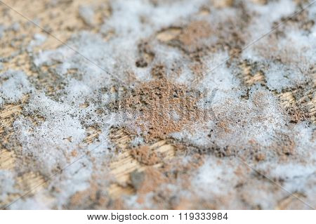 Thick Mold Texture On Wood