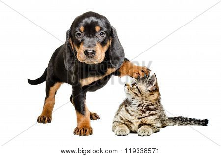 Puppy standing with paw on the head of a cat