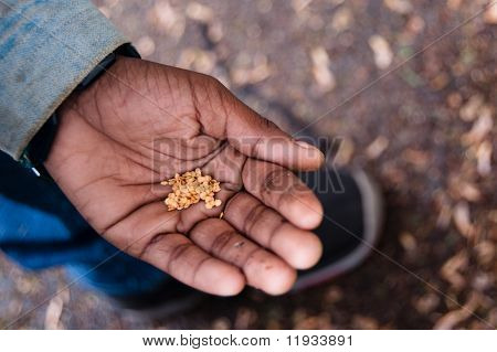 Seeds in Child's Hand