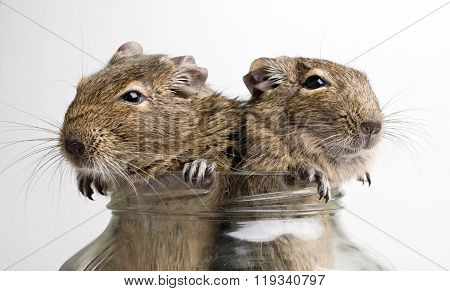 Two Mice In Jar