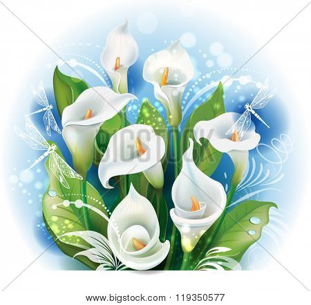 Bouquet of White Calla lilies