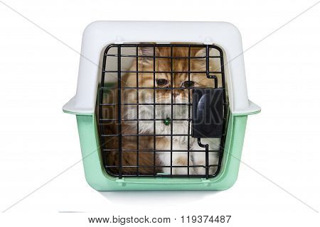 Cat In Pet Carrier On White Background