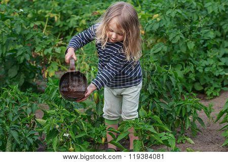 Little gardener girl at summer watering vegetables work
