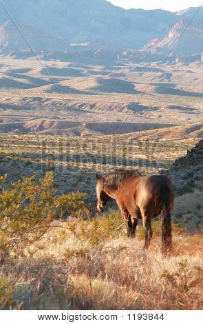 Desperado Horse
