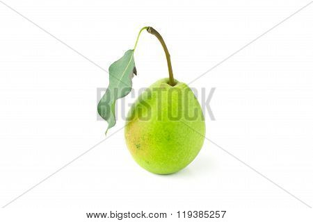 One green pear