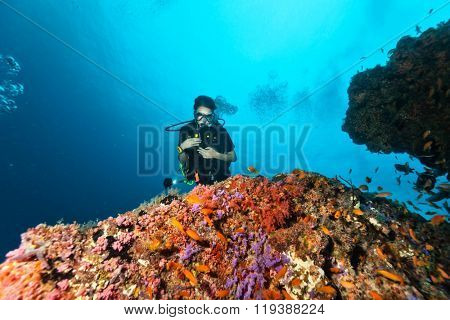 Young female scuba diver underwater examine closely coral reef