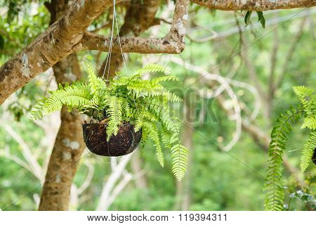 Green Sword Fern Under Tree