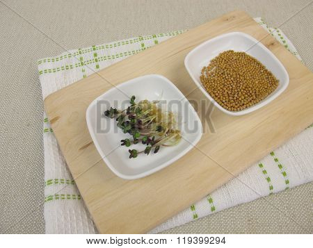 Yellow mustard seeds and mustard sprouts