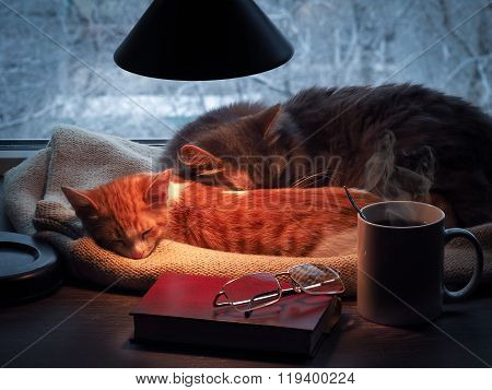 Cats sleeping under a lamp on a window sill of the window