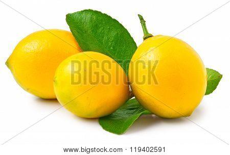 Three lemons on the white background isolated