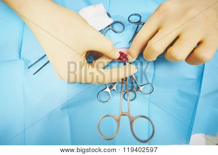 Hands Of Veterinarian