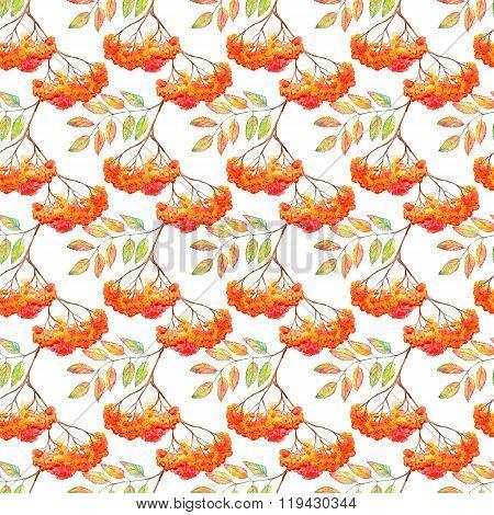 Watercolor Rowan Ashberry Leaf Branch Seamless Pattern