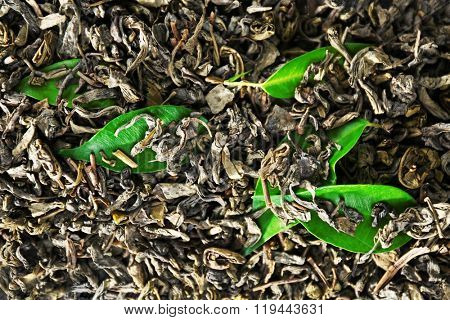 Granulated tea with green leaves as background