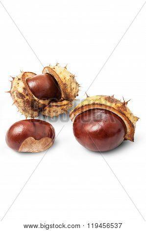 Autumn Horse Chestnuts.