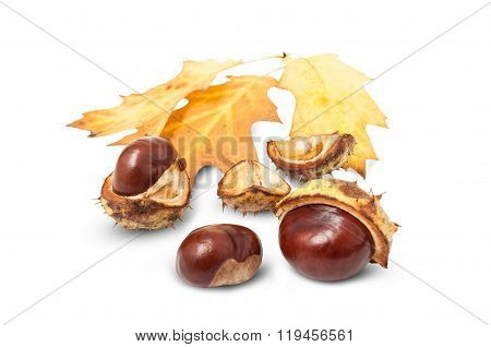 Yellow Leaves And Horse Chestnuts