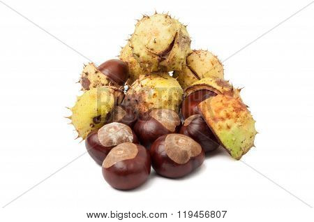 Horse Chestnuts Isolated On White Background
