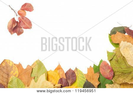 Two Sides Border Of Dry Autumn Leaves