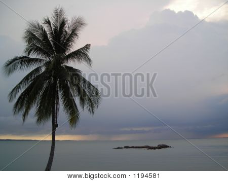 Coconut Tree On Beach At Bintan Indonesia