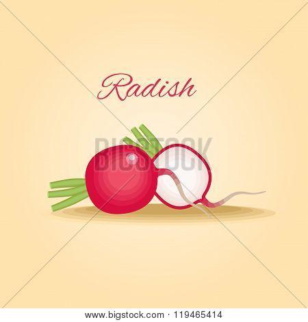 Fresh crunchy radish vector illustration