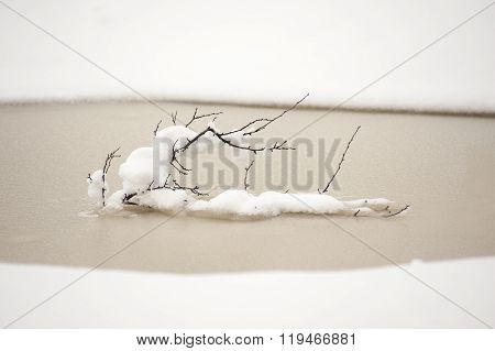 Snow Covered Lonely Twigs In Winter Puddle