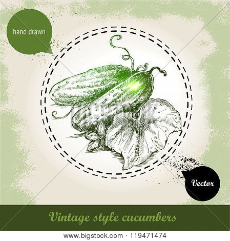 Hand drawn fresh whole cucumbers with leaf and flower. Vintage sketch style organic eco vegetable il