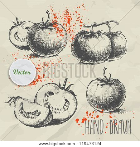 Set of hand drawn tomato. Vintage sketch style illustration. Organic eco food
