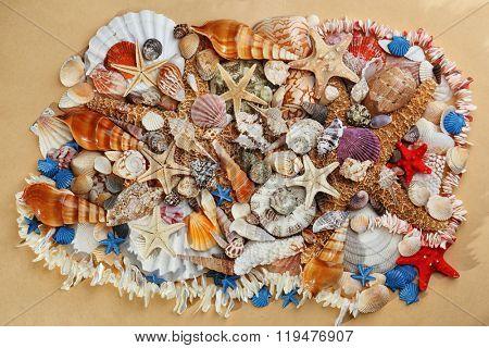 Sea shells on beige background
