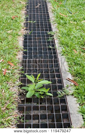 Iron Grate Of Water Drain In Grass Garden Field