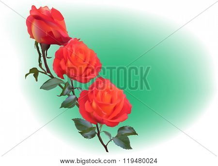 illustration with red roses on green background