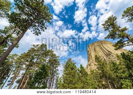 Devils Tower And Trees