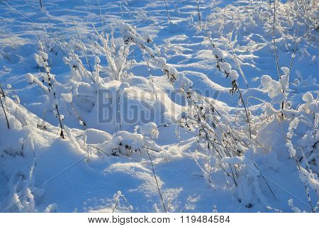 Winter Landscape With Dry Grass.