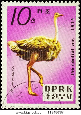 Ostrich (struthio Camelus) On Postage Stamp